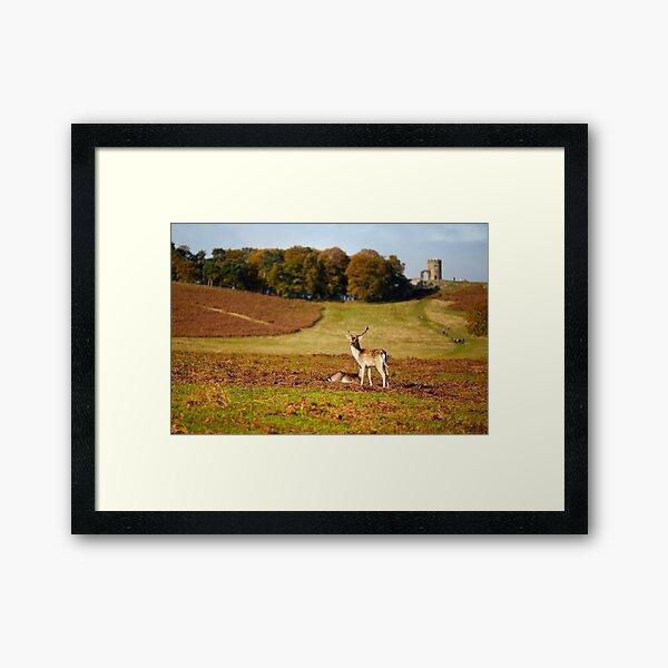 Bradgate Deer Framed Art Print