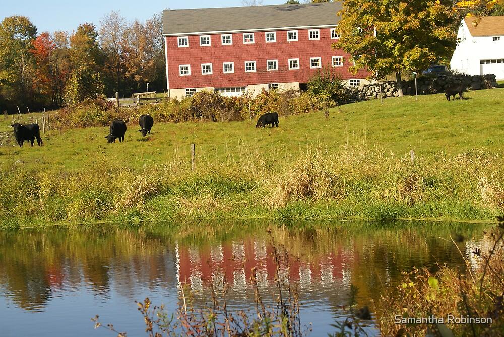 The pasture by Samantha Robinson