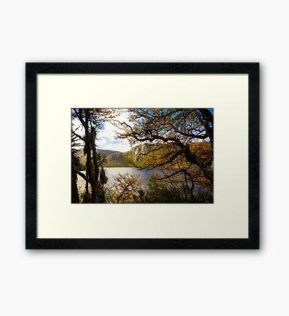 The beautiful Fagus Framed Print