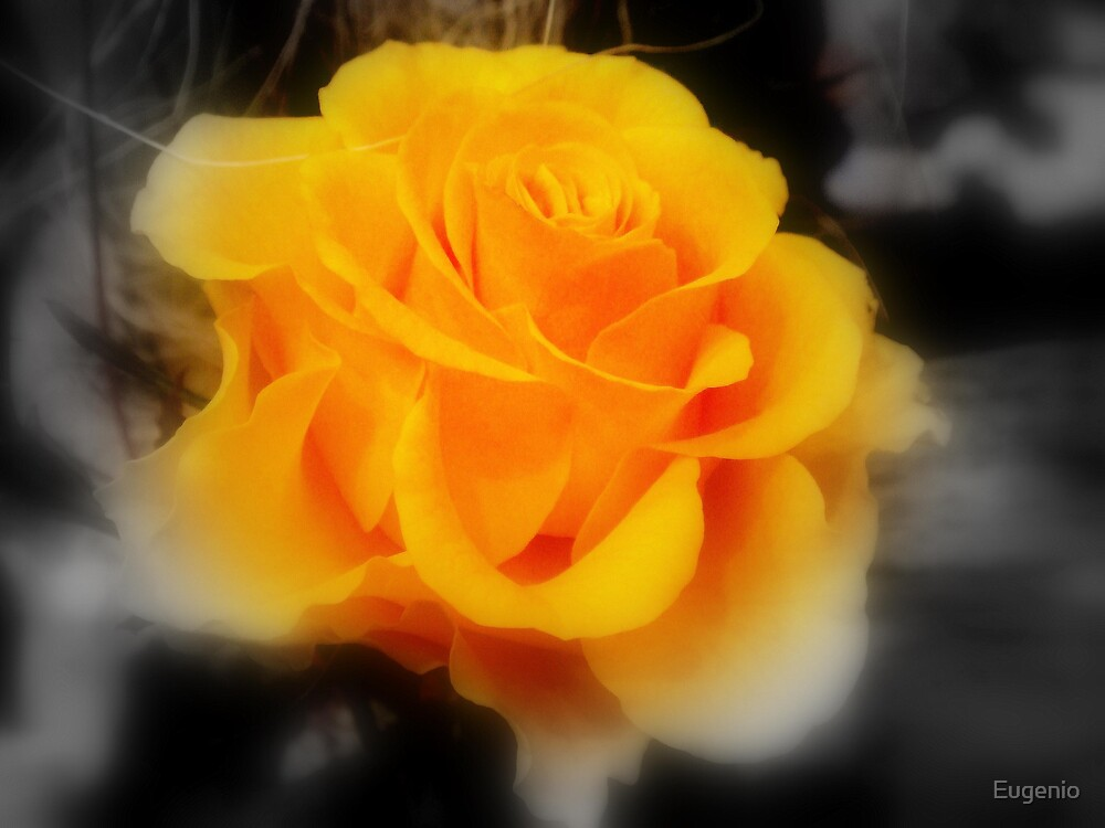 Yellow Rose.. by Eugenio