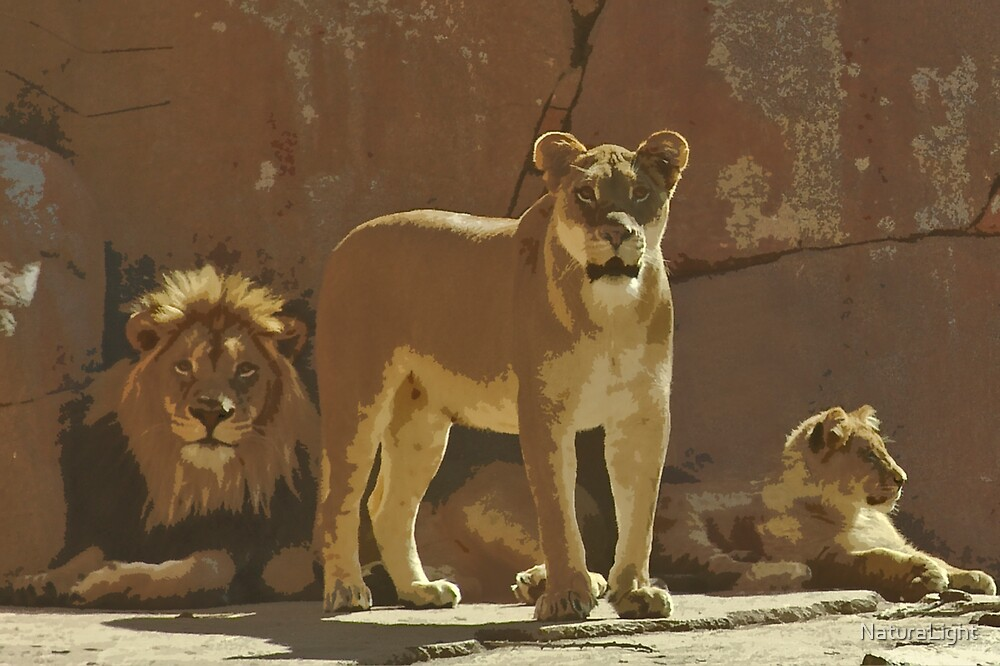 Stylized photo of lion family. by NaturaLight