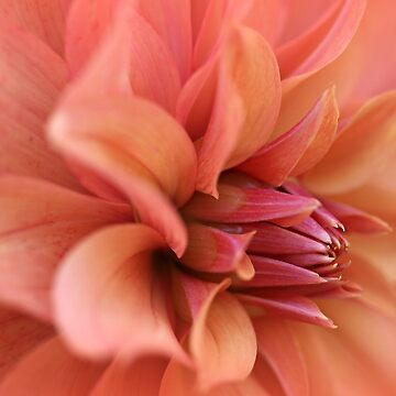 Depth of Dahlia by gracethescene