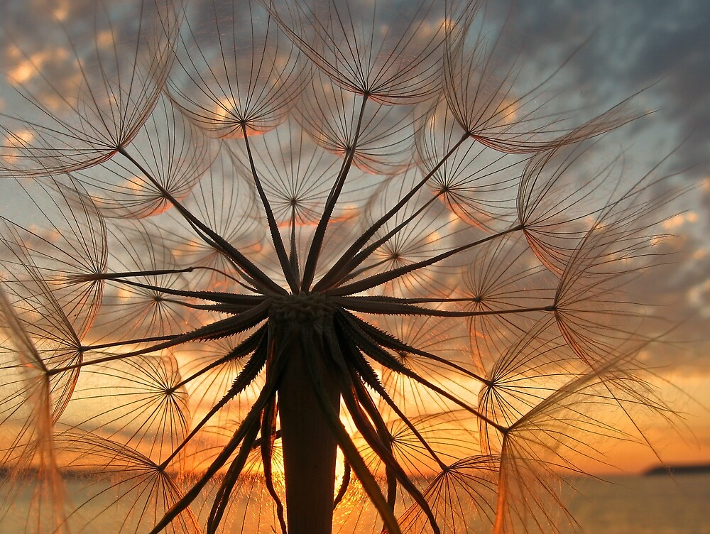 Sunset Weed by Corey Bigler