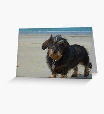 Daisy on her Cornish Beach Holiday Greeting Card