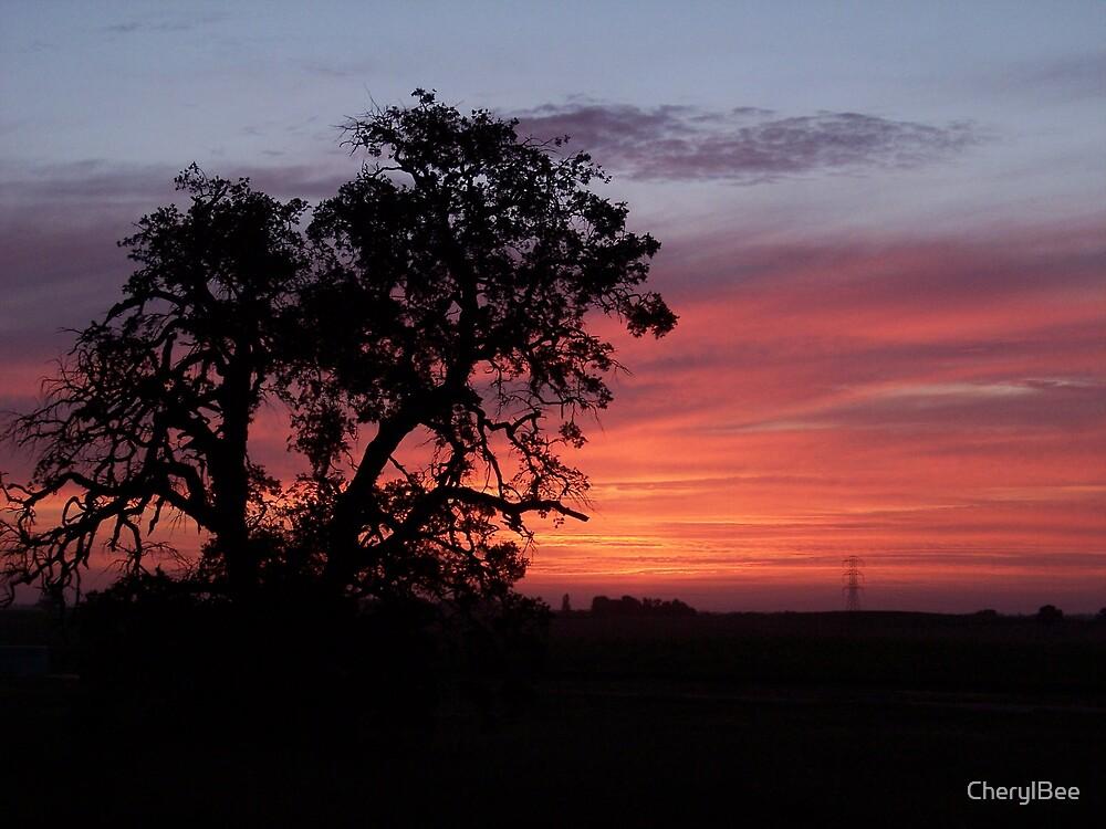 Oak Tree Sunset by CherylBee