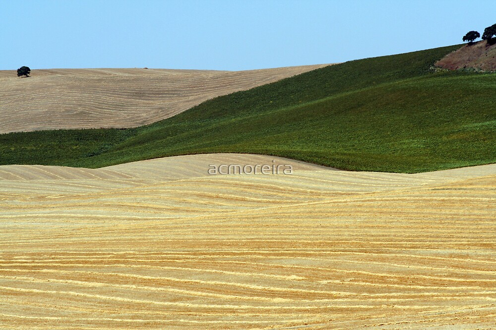Fields - Andaluzia by acmoreira