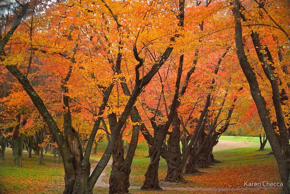 Fall Tree Grove by Karen Checca