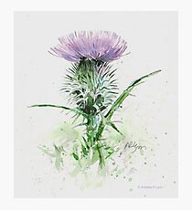 Thistle - version two Photographic Print