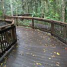 Mabi Forest_Atherton Tablelands_Queensland_Australia by Kay Cunningham
