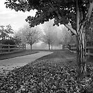 October In Black And White by Pamela Hubbard