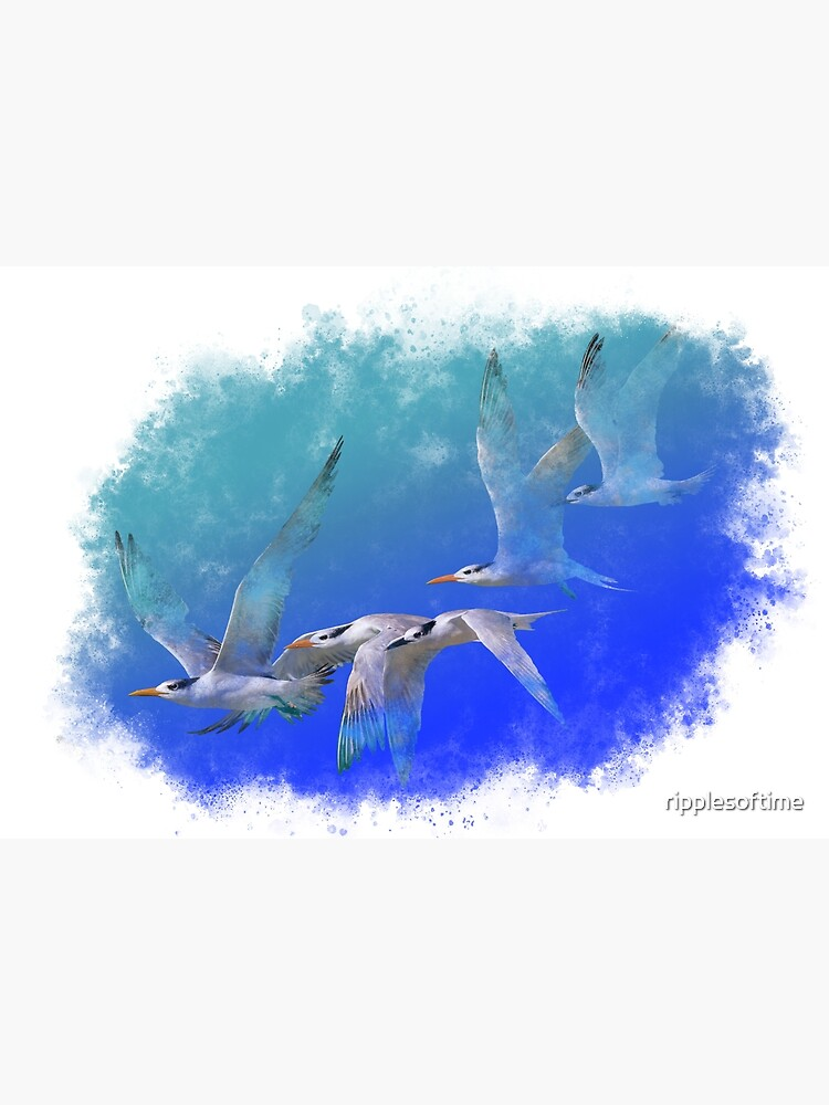 Terns at the beach by ripplesoftime