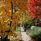 Sidewalks Of Boulder by Pamela Hubbard