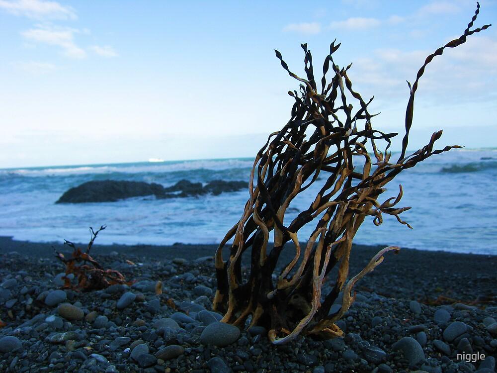Owhiro Bay Wellington by niggle