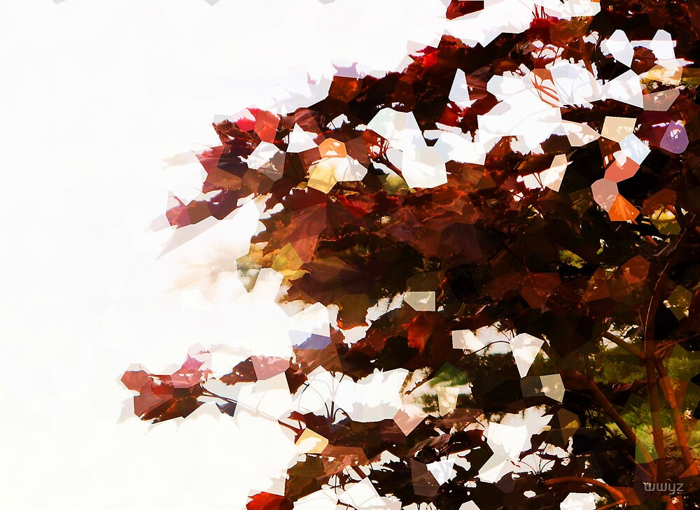 Leaves and Light by wwyz
