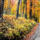 Autumn on Long Pond Road by Wayne King