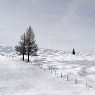 Winter Meadows by Kasia-D