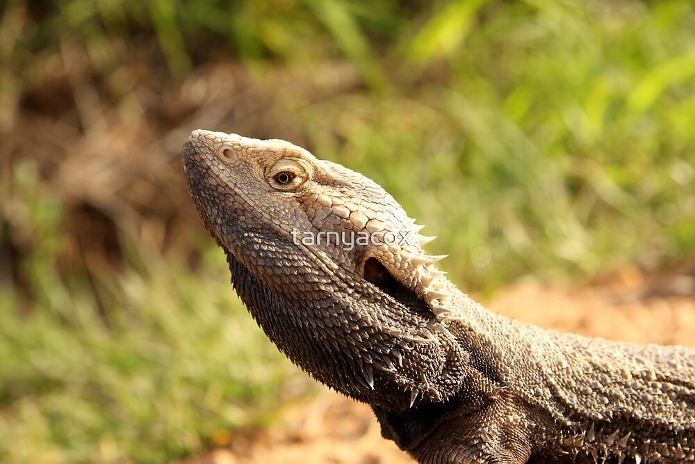 Bearded Dragon (_Pogona barbata_) by tarnyacox