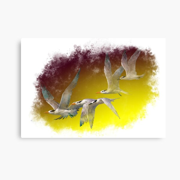 Terns flying together Canvas Print