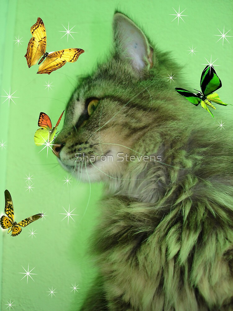 Butterly Kitty ll by Sharon Stevens