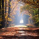 Into Autumn by Jo Nijenhuis