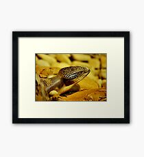 Popping Out Framed Print
