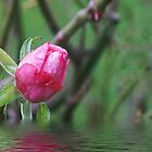 Pink Rosebud by Gilberte