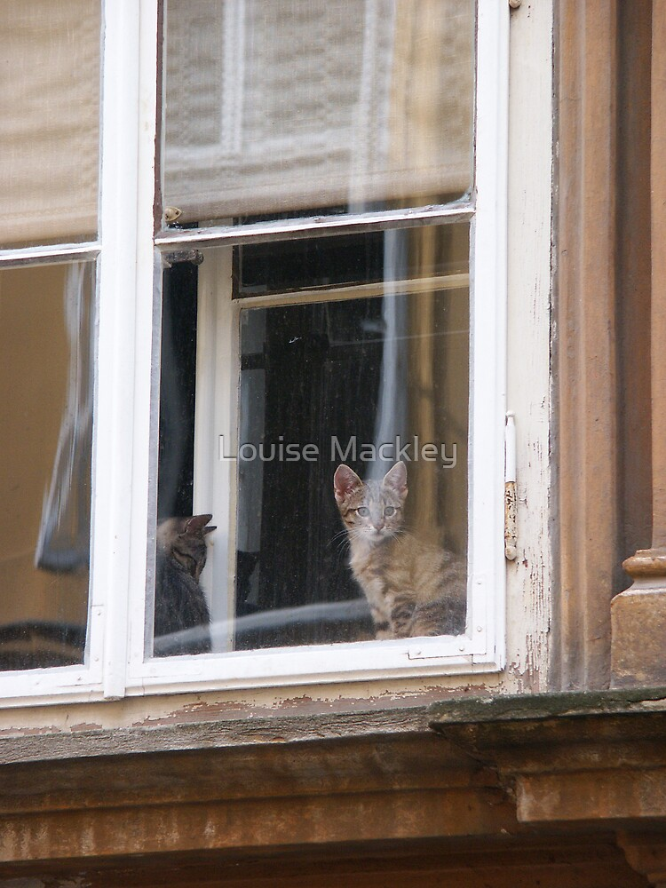 Zagreb Cats by Louise Mackley