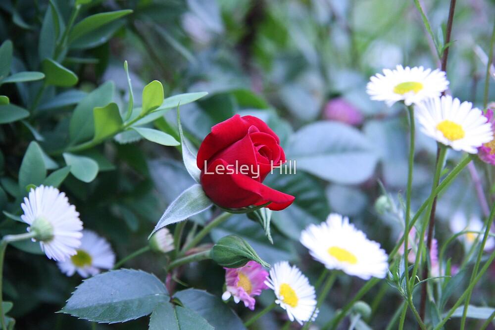 Beauty Peeking Through Beauty! by Lesley  Hill