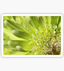 Green Daisy Macro Sticker