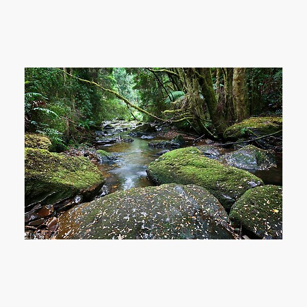 Nelson  River Photographic Print