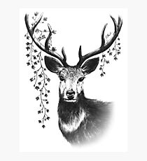 Majestic Stag Photographic Print