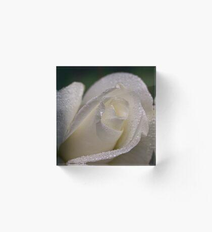 Weißer Rosenknospe im Regen Acrylblock