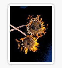Sunflowers II Sticker