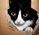 Cat in a Box! by Ingrid Beddoes