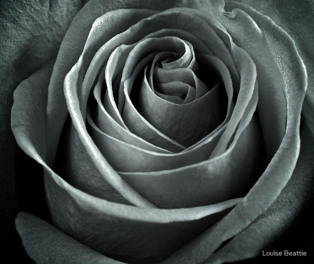 Rose  by Louise Beattie