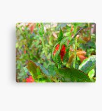 Strawberry Jam Canvas Print