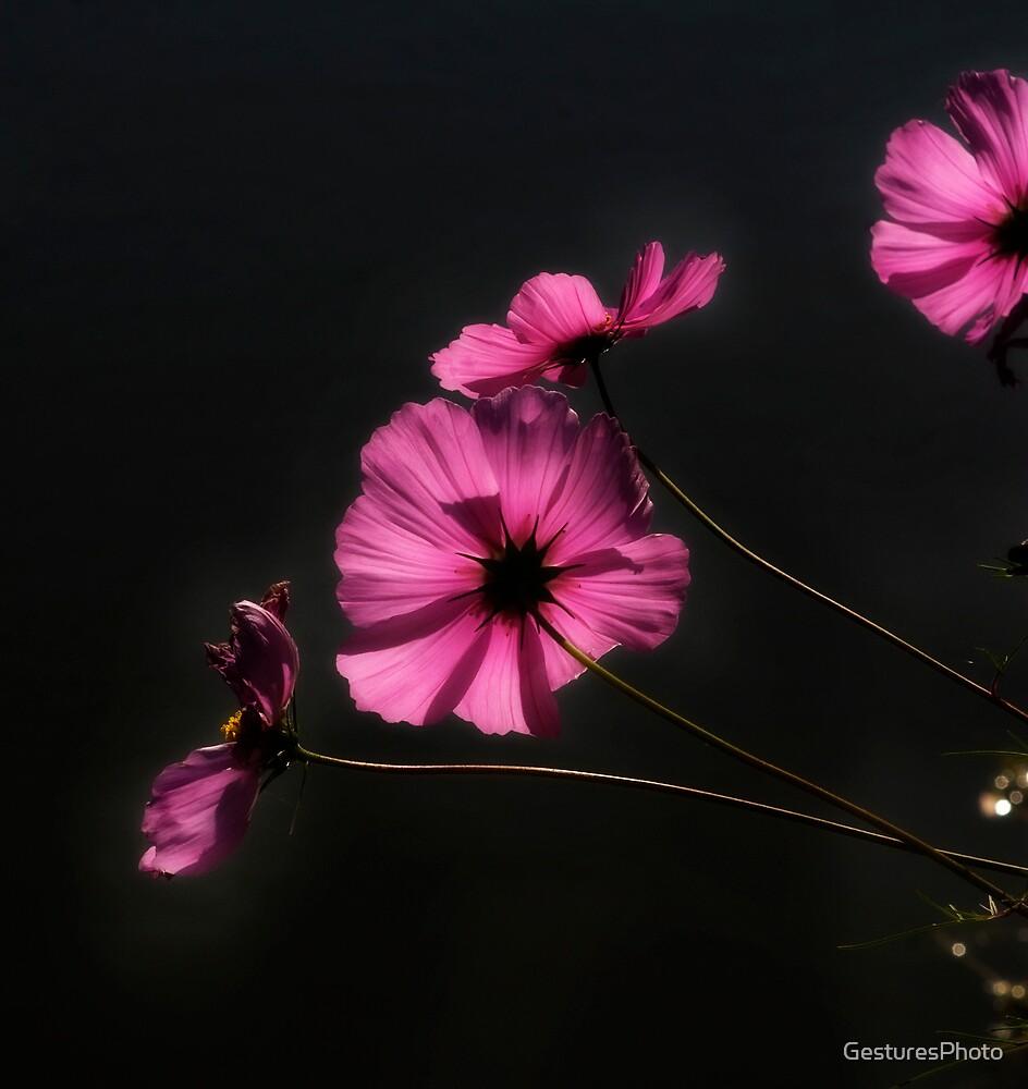Backlit Pink Flowers by GesturesPhoto