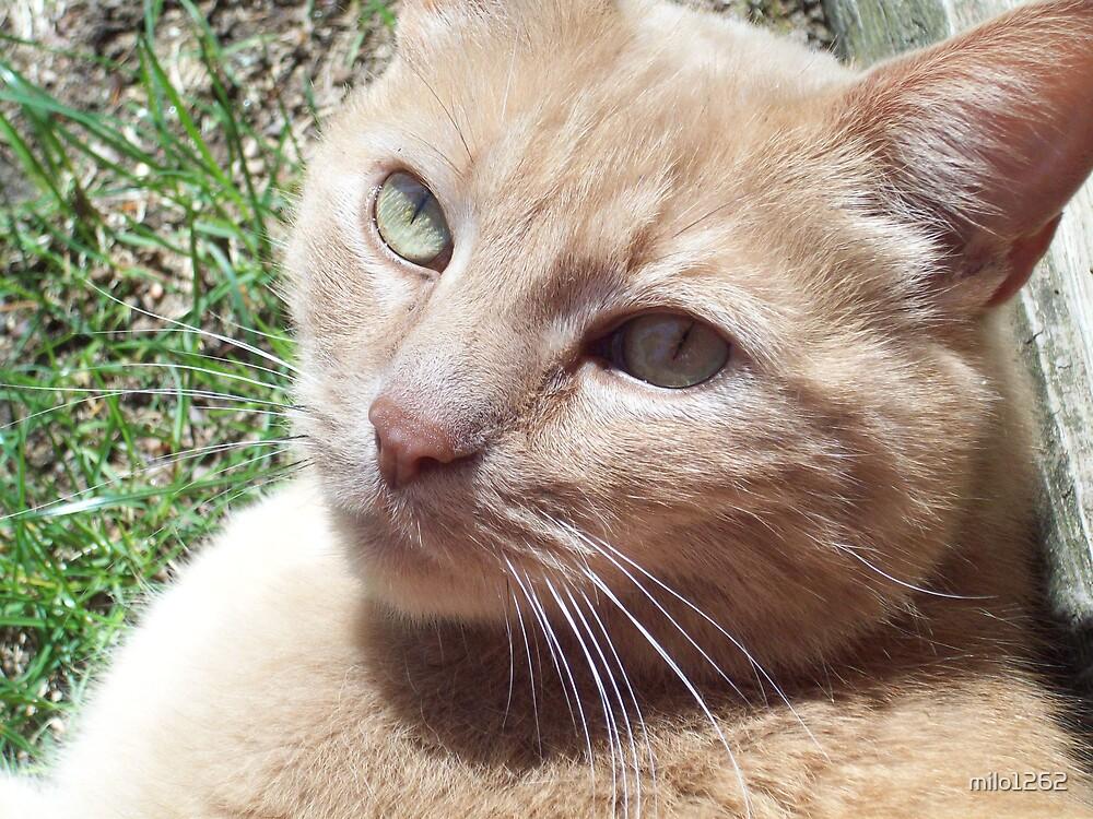 Milo enjoying a sunny day by milo1262