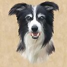 Border Collie by John Edwards