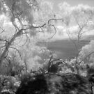 Lake Jindabyne from the singletrack - infrared by Syd Winer