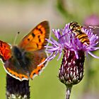 Small Copper & Hoverfly by AnnDixon