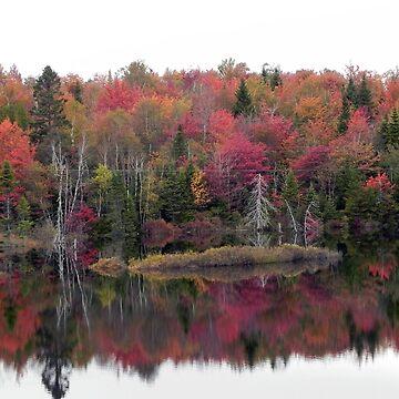 Fall Wonder by MarthaMedford