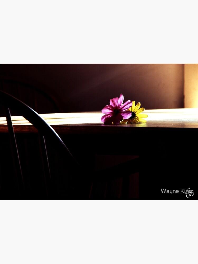 Flowerheads in the Sun by waynedking