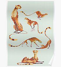 Cheetah poses Poster