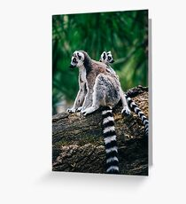 Lemur and Baby Greeting Card