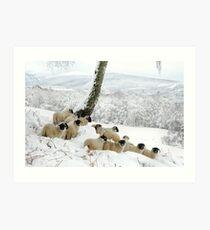 Sheltering Flock - Sheep in Christmas Snow Art Print