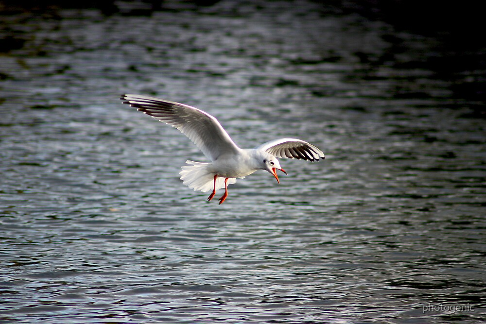 the name is gull, sea gull by photogenic