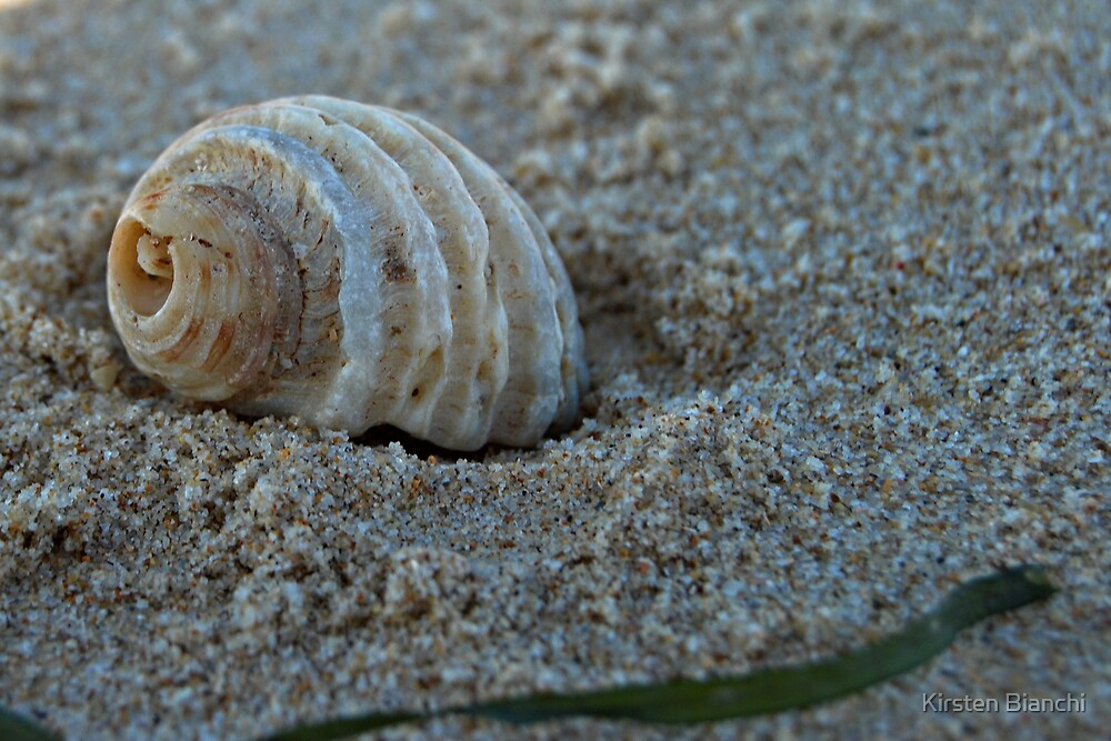 Sea Shell by Kirsten Bianchi