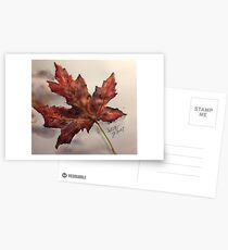 Fall Maple Leaf Postcards