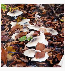 forest floor with mushrooms Poster